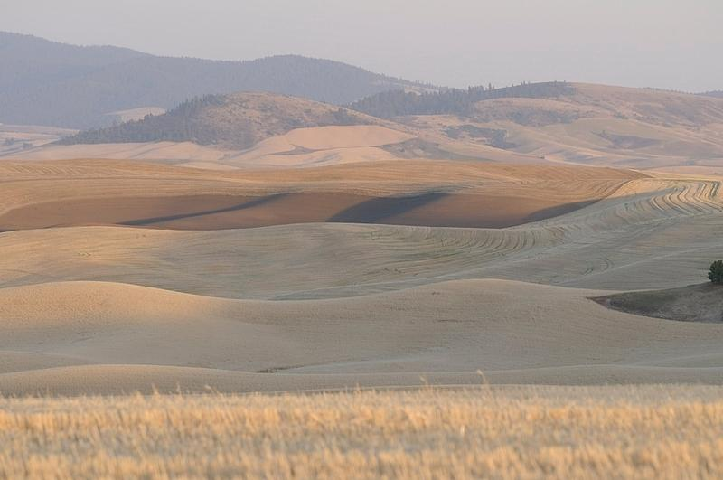 palouse_farmland_03Sep2008_0921.jpg