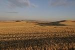 palouse_farmland_03Sep2008_0904.jpg