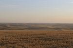 palouse_farmland_03Sep2008_0908.jpg