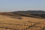palouse_farmland_03Sep2008_0909.jpg