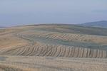 palouse_farmland_03Sep2008_0937.jpg